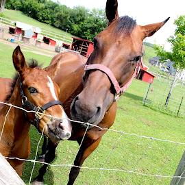 by Marjorie Bazluki - Animals Horses