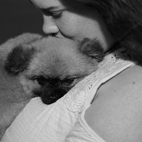 Sleepy Pup Cuddles to Mom by Mike Zegelien - Animals - Dogs Puppies ( sweet, dog portrait, puppy, dog, pomeranian )