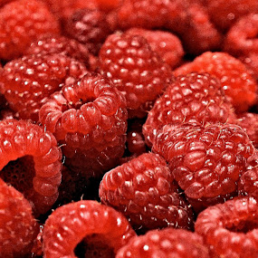 Raspberry Harvest by Becky McGuire - Food & Drink Fruits & Vegetables ( mcguire, foodie, breakfast, nomnom, object, landscape, eat & drink, berry, jay goyani, family, food & beverage, cooking, lunch, hungry, meal, dessert, cook, fruit, raspberry, colors, yummy, portrait, dinner, tasty, tvlgoddess, groceries, color, food, eat, harvest, filter forge, garden, berries,  )