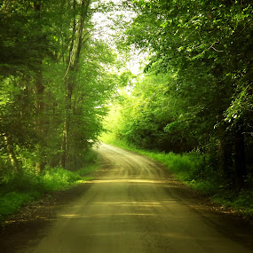 The Journey by Colleen Legree - Landscapes Forests ( green, journey, sunshine, road, landscape, woods )