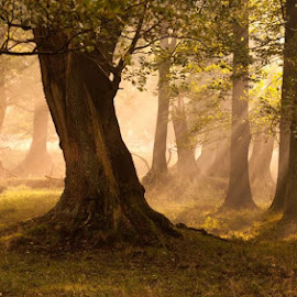 by Mads Arnholtz - Landscapes Forests