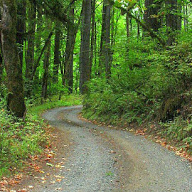 The Long Gravel Road by Janet Young- Abeyta - Landscapes Forests