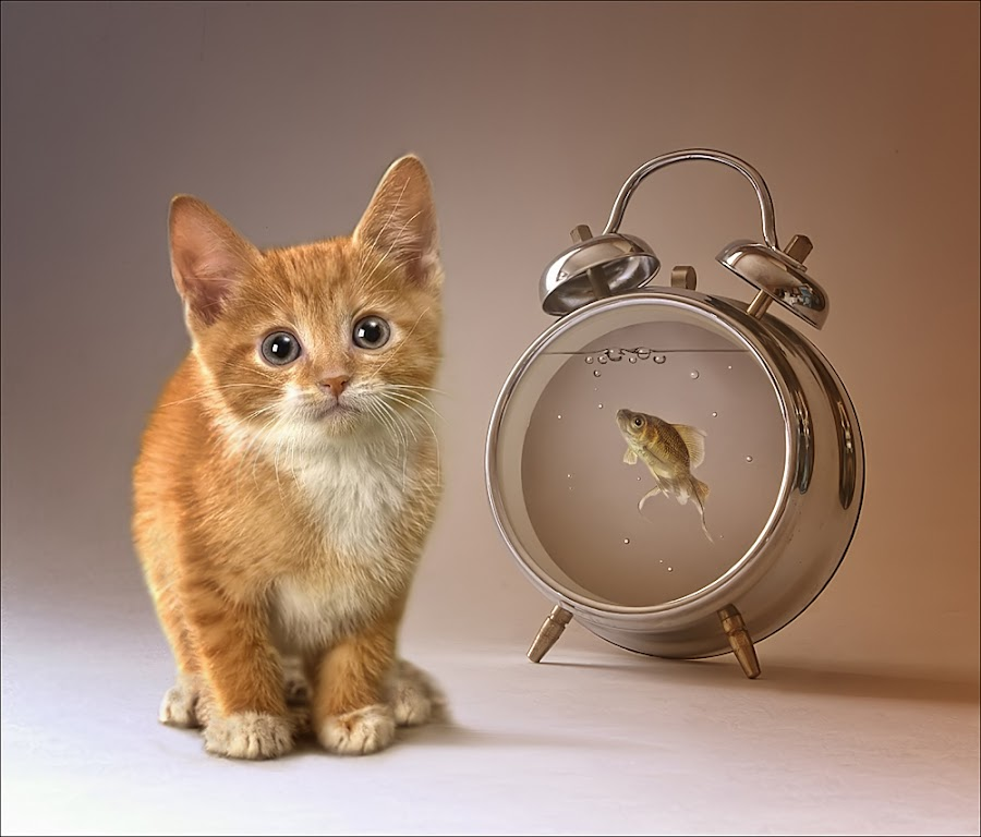 innocense by Clint Newsham - Digital Art Things ( cat, clock, fish )
