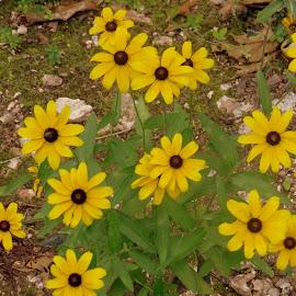 by Steve Tharp - Flowers Flowers in the Wild