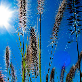 High Noon by Even Steven - Nature Up Close Leaves & Grasses ( noon, grass, bright, blue, weed, glare, hot, high noon, pov, flare, sun )
