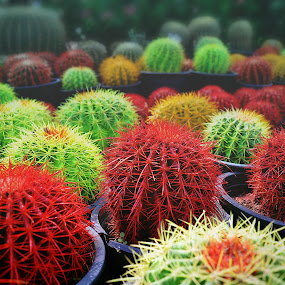 cacti by Don Eugene Roces - Nature Up Close Other plants
