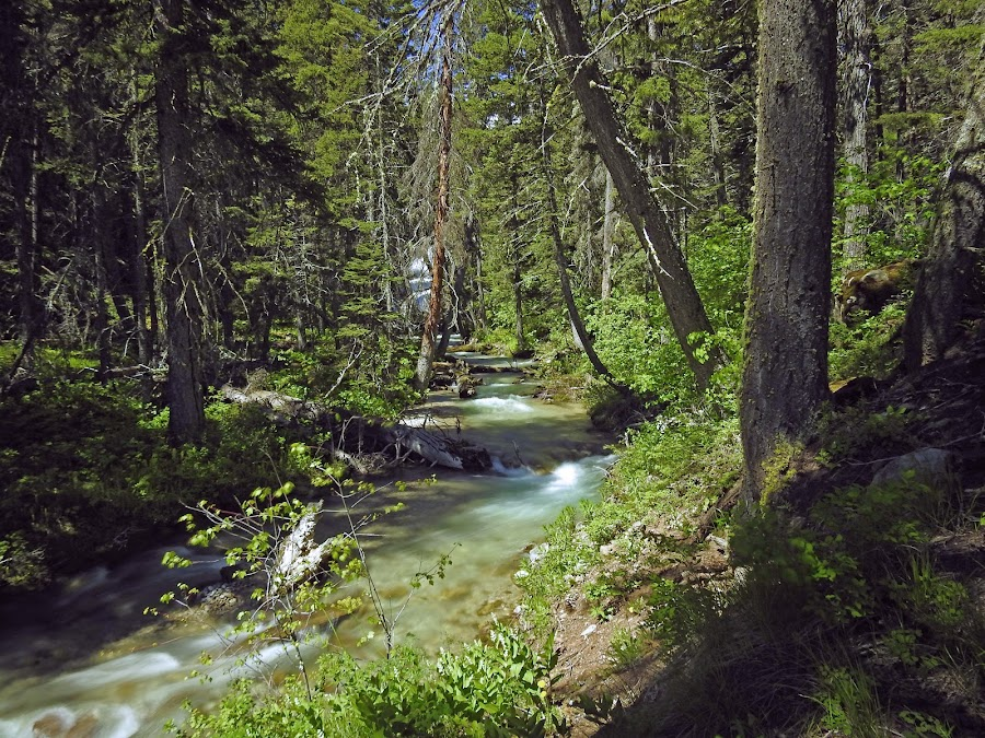 Ford Creek by James Oviatt - Landscapes Waterscapes