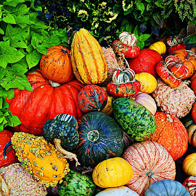 ----------Pumpkins---------- by Neal Hatcher - Food & Drink Fruits & Vegetables ( Food & Beverage, meal, Eat & Drink,  )