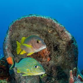 CozumelFish by Hezi Shohat - Animals Fish ( nikon, love, mexico, coral, fish, cozumel, sea )