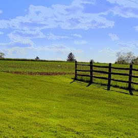 by Missy Grove Horne - Landscapes Prairies, Meadows & Fields (  )