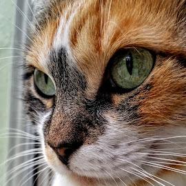 { Snoopy watching Squirrel on window }  by Jeffrey Lee - Animals - Cats Portraits ( { snoopy watching squirrel on window } )