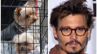 johnny-depp-dogs