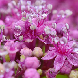 we all got a bit wet  by Eloise Rawling - Nature Up Close Natural Waterdrops ( purples, raindrop, rain, flower )
