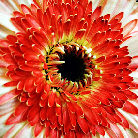 by Sanjiban Ghosh - Nature Up Close Flowers - 2011-2013