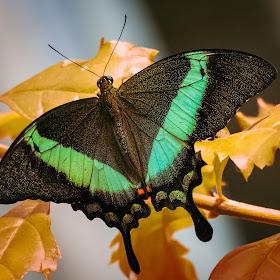 Butterfly Enhanced.jpg