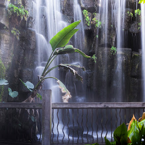 In the jungle.. by Jirka Vráblík - Landscapes Waterscapes ( jungle, waterfall )