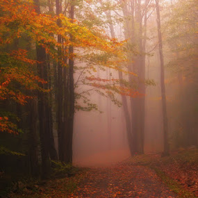 Foggy fall morning  by Ernie Page - Landscapes Forests ( fog, fall, forest, morning, landscape, fall color,  )