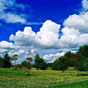 Spring in tuscany by Fabrizio Reali - Landscapes Prairies, Meadows & Fields ( clouds, canon, sky, colors, white, flowers, spring,  )