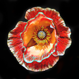 Poppy Play by Nancy Merolle - Digital Art Things ( orange, poppy, flowers & plants, things, glow, digital art )