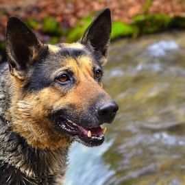 smile by Jojo Pried-Horsky - Animals - Dogs Portraits ( look, pjatka, nature, smile, dog, friend )