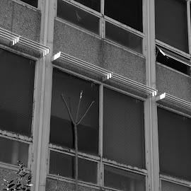 Waldo by Jay Fickess - Buildings & Architecture Architectural Detail ( waldo, george caleb bingham carter junior high school 1959, wornall road, 75th street )