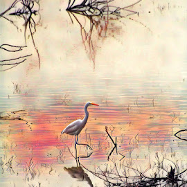 Waiting by Yosippavar Yosi - Digital Art Animals ( bird, art, heron )
