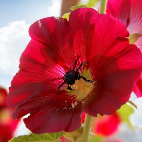 honey flower by Laxmikant Shah - Flowers Single Flower (  )