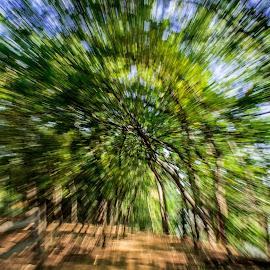 the gate by Dario Riano - Abstract Patterns ( park, nature, green, explosion, outdoors, summer, trees, forest, shadows )