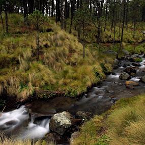 Pines and river by Cristobal Garciaferro Rubio - Landscapes Forests