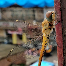 by Dr. Sagar Mayekar - Animals Insects & Spiders