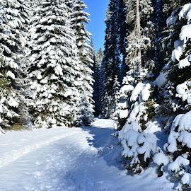 Zimska kulisa by Bojan Kolman - Landscapes Forests (  )