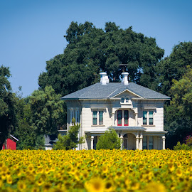 20170715 - Farm house in field for Sunflowers by John Rourke - Buildings & Architecture Homes ( farm, 2017, sky, ca, farm house, california, trees, sun flowers,  )