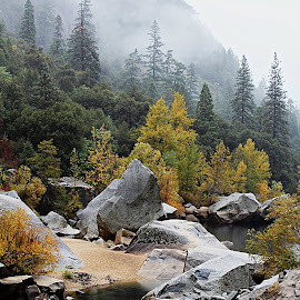 Rainy day in Yosemite by Patty Hartigan - Landscapes Forests ( fall colors, waterscape, yosemite, forest, river )