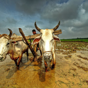 The Farmers of India by Dhritiman Lahiri - People Street & Candids ( farmers, monsoons, westbenagl, farms, durgapur, india, farming )