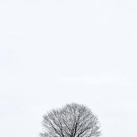 by Stephen Davis - Uncategorized All Uncategorized (  )