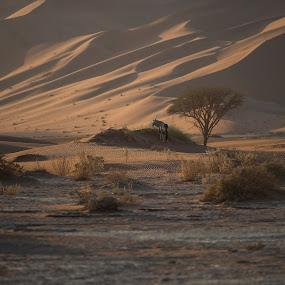 Early morning at Sossusvlei by Ronnie Bergström - Landscapes Travel ( morning sun, sunrise, sossusvlei, nature, namibi, morning, namibia, sand, oryx, early morning, travel, desert, wild, wild animal, wildlife )