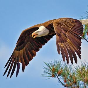 From-the-Nest-Tree-O-42209.jpg