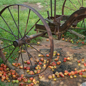 Antique Wheels near Apple Tree by Jim Czech - Artistic Objects Antiques ( farm machinery, wheel, apples, rusty, antique,  )