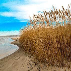 Cat tails by Lena DeStefano - Landscapes Beaches