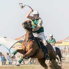 Polocrosse by Gert van Niekerk - Sports & Fitness Lacrosse