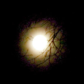 Winter Moon 1 by RMC Rochester - Digital Art Abstract ( abstract, moon, nature, trees, night )