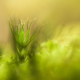 Moss close-up by Mikaela Friberg - Nature Up Close Leaves & Grasses ( nature, green, moss, forest, woods,  )