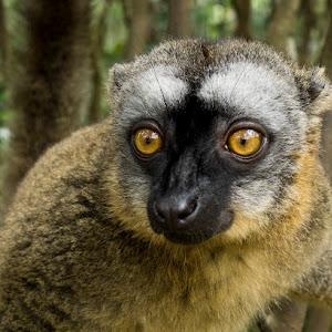 lemury8..jpg