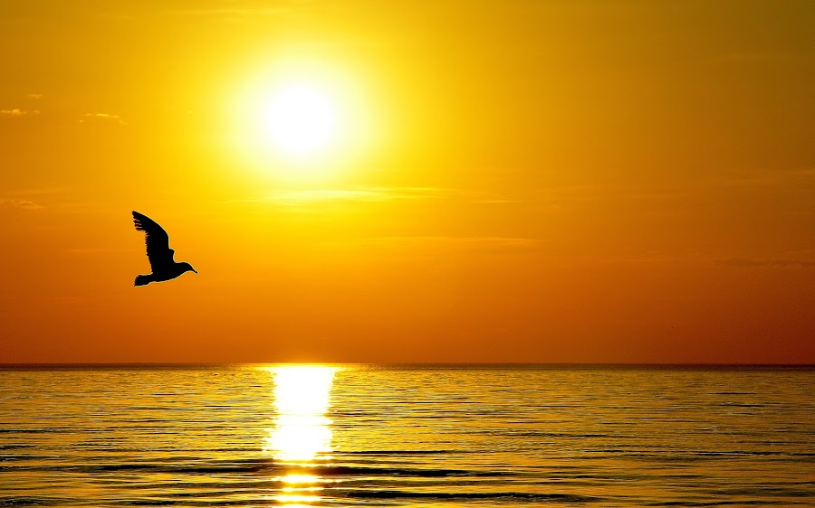 The Fly  by Patricija Andrijaityte - Landscapes Waterscapes ( bird, waterscape, sun )