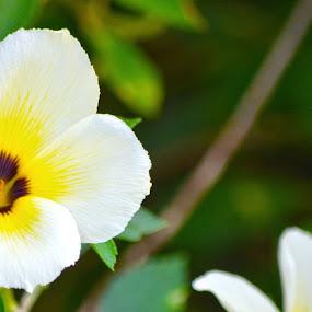 Flower by Kelvin Đào - Nature Up Close Flowers - 2011-2013 ( green, white, yellow, garden, flower )