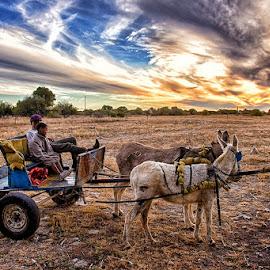Donkey Cart by Neil Joubert - Transportation Other ( sky, grass, donkey, cart, landscape )