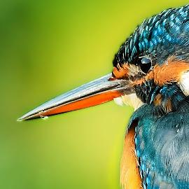 by Dinesh Pandey - Animals Birds