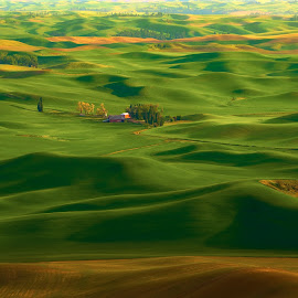 Palouse Home by Dan Hayes - Landscapes Prairies, Meadows & Fields ( farm, hills, palouse, rolling, sunset, green, grain, scenic, house, landscape, fertile )