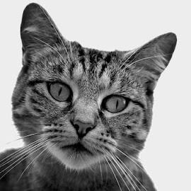 pumba by Bane Podrumac - Animals - Cats Portraits