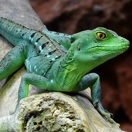 by Shawn Thomas - Animals Reptiles